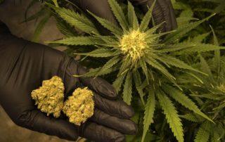 Marijuana Dispensary Credit Card Processing Canada