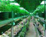 Marijuana Dispensary Merchant Service Companies