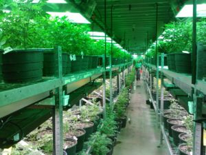 Marijuana Dispensary Merchant Service Companies