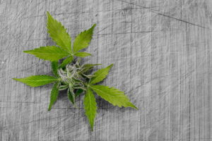 Cannabis Accessory Merchant Services Canada